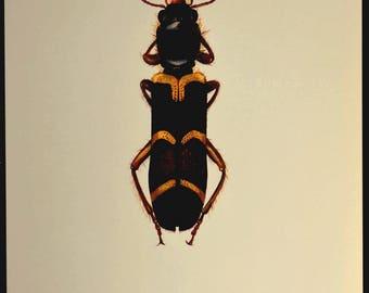Bug Wall Decor Beetle Print Beetle Art Insect Nature Vintage