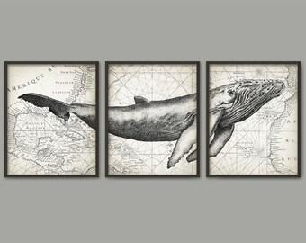 Affiche d'Art mur baleine à bosse ensemble de 3 - baleine reproduction d'Art - Poster - Art mural de baleine à bosse - baleine à bosse la biologie Marine (AB393)