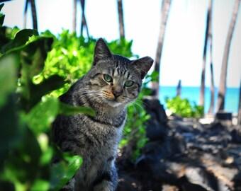 Cat Art, Photography, Beach Cat, Fine Art, Hawaii, Cat, Beach, Big Island