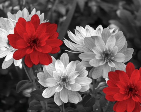 Black And White Photo With Red Flower
