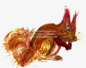 Red Squirrel, Bramley wood collection 2016