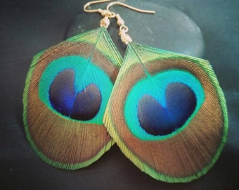 Big earrings in natural Peacock feather.