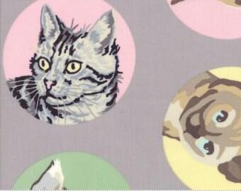 Miauw of nooit door Erin Michael voor Moda - Furball - grijs - 1/2 Yard katoen Quilt stof 1016