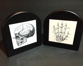 Anatomy Bookends, Laser Engraved (Set of 2)