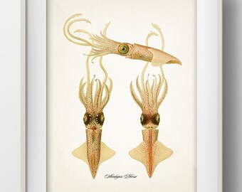 Bioluminescent Abraliopsis Squid Collage - OC-03  Fine art print of a vintage natural history antique illustration