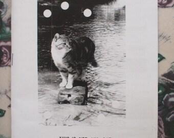 Cat zine - This is Not My Cat