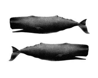 Twin Whales Nautical Vintage Style Art Print Beach House Decor Black and White