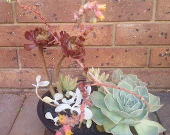 Succulent Terrarium - Large Planter - UMG03