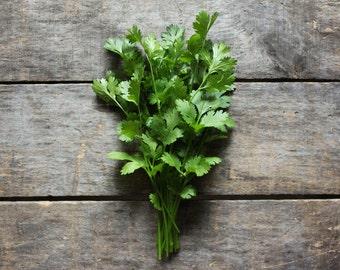 Cilantro, heirloom seeds, herb seeds, organic seeds, herb garden, open pollinated, companion planting, gardener, coriander seeds, garden