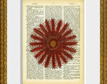 20 POINT STARFISH recycled book page art print - upcycled antique dictionary page with an antique sea life illustration - vintage charm
