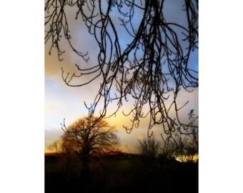 Irish Landscape Fine Art Photography - Winter Trees Print - County Down Sunset - 8 x 10