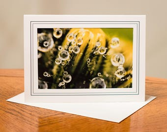 Spring Photograph Cards - Set of 4 / Blank Inside / Nature Photo Note Card / Greeting Card Fine Art