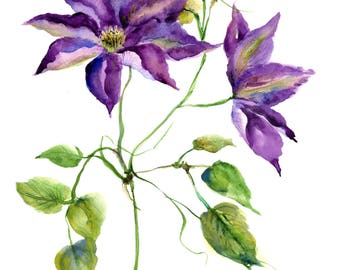 clematis print-  watercolor clematis flower print-  watercolor floral art- purple clematis painting- botanical flower print- violet