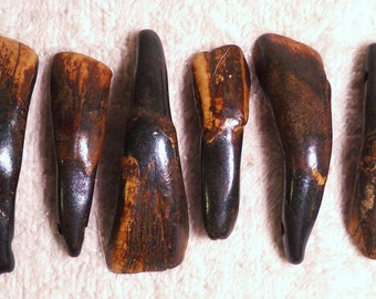 5 Real Bone Drilled Water Buffalo Tea Stained Teeth Taxidermy Genuine Tooth Bones Pendant Beads