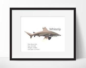 Whitetip Shark Facts - Shark Decor - Nursery Print - Nursery Art - Classroom Art - Whitetip Shark Print - Shark Prints Instant Download 8x10