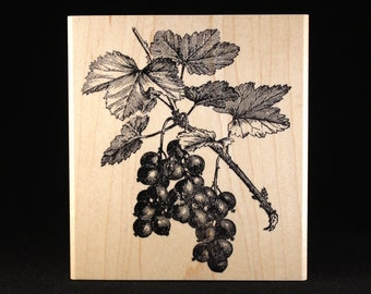 """Red Currant (4"""" x 4.5"""")"""