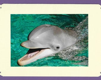 Dolphins ~ Pick 6 Greeting Cards ~ blank inside