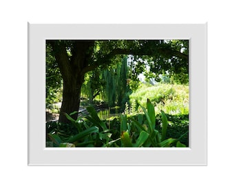 Digital Photo - Adelaide Botanic Gardens 2 - South Australia