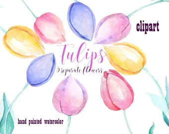 Women's day, Digital watercolor clipart, 8 March, Tulips,Mothers Day,Spring, Flowers,Wedding,Clipart,Floral,Cards,Tulips clipart