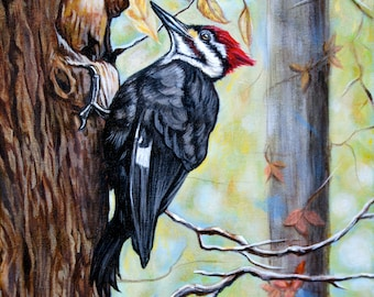 Woody- Portrait of a Pileated Woodpecker