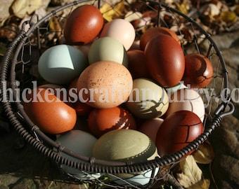 Blown Eggs, Multi Colored Eggs, Sky Blue Eggs,  Hand blown Eggs, Real Eggs, Chicken Eggs, Craft Eggs
