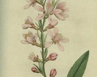 "hydrating FACIAL CREME ""almond"" (100 ml / 3.4 oz) for sensitive skin"