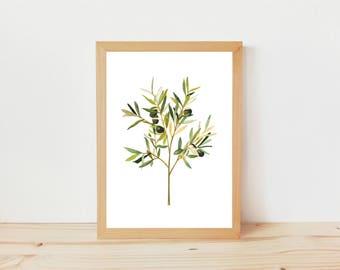 dibujo olivo, ilustracion botánica, dibujo naturaleza, dibujo plantas, acuarela hojas, dibujo, ilustración planta, print, print alegre