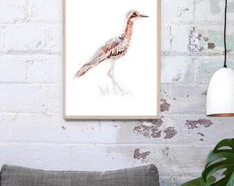 Australian Bush-stone Curlew A3, A2 & A1 bird watercolour illustration giclee art print
