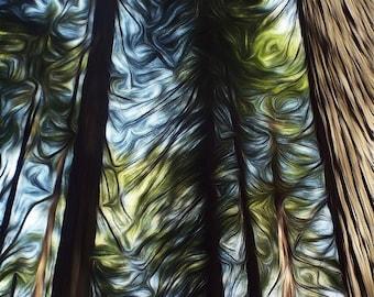 Redwood Trees Grove - Digitally Enhanced 8x10 Photo Print