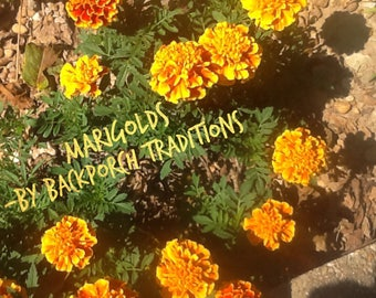 FrontPorch Marigolds