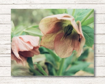 Neverland Fairies - Canvas Wall Art, Neverland Wall Art, Pink Flower Photography, Botanical Photography Wall Art, Children's Room Canvas