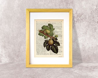 Figs fruit dictionary print-Kitchen wall art-Figs art print-Figs on book page-Botany print-wedding print-figs art print-NATURA PICTA-DP002