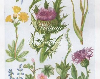 Vintage Antique 1930s Flowers botanical bookplate original lithograph art print illustration 5396