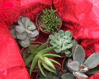 Succulent Gift Box (6)