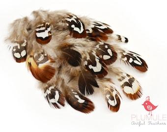 20 pcs - PHEASANT Brown Reeves Venery Plumage Loose feathers : 120