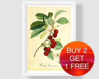 Cherry Art Print, Cherry Illustration, Botanical Art Print, Cherry Wall Art, Antique Botanical Print, Cherry Kitchen Decor, Cherry Poster