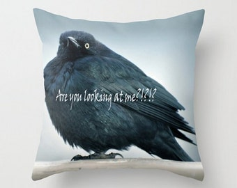 Little Bird Cushion, Are You Looking At Me,Throw Pillow Cover, Bird Home Decor, Fluffy Feathers, Black, Blue iridescent, Nature Photography