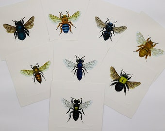 Set of 8 Native Bees of Australia Unframed Prints