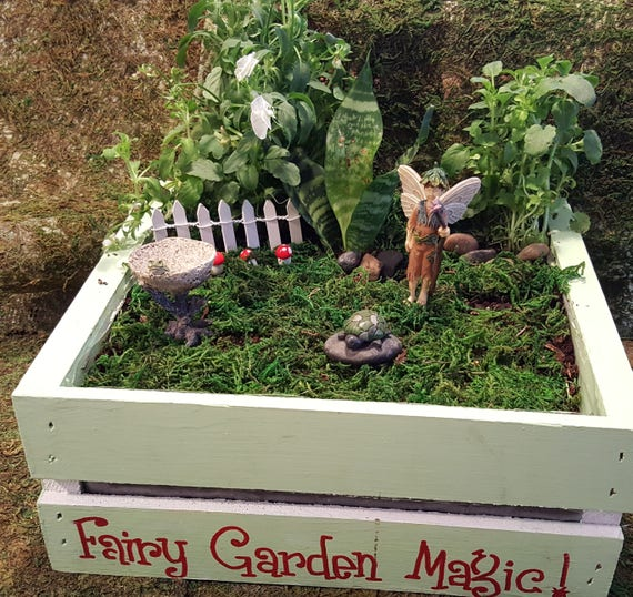 Fairy Lucas Fairy Garden Kit - (Plants and Soil not incl.)