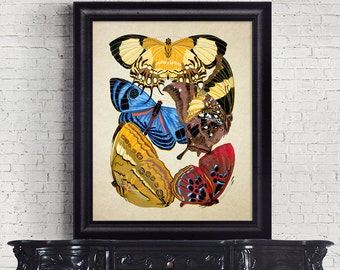 Antique Botanical Print Wall Art Print Butterflies Insects Giclee Vintage Home Decor Natural History Print Art Decorative Reproduction BF002