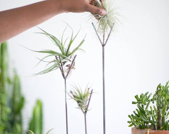 Tall Size | Weathered Turquoise Air Plant Stand - tillandsia, plant stand, terrarium, modern, succulent,  zen, office gift, desk accessory