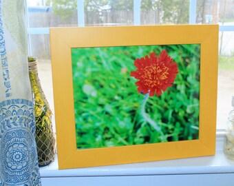 Flower Photography, Flower Decor, Framed Flower Photography, Home Decor, Spring Photography, Spring Decor, Landscape Photography