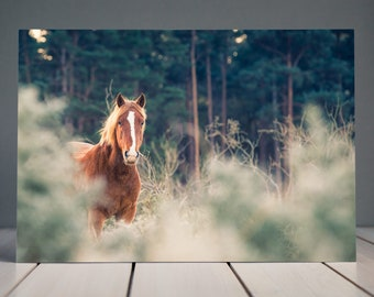 New Forest Pony Print | Horse Photography | Equine Wall Art | Equine Fine Art Horse Print | Horse Decor | Horse Wall Art | Wild Horse