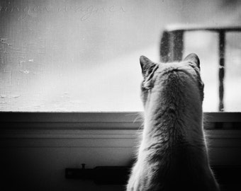 Black and White Animal Photography - Curiosity - 4x6 fine art print - cat feline animal monotone wall art home decor