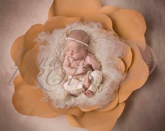 digital backdrop - newborn photography -yellow  flower - digital prop