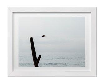 Nature Photography, Bird in Flight, Ocean Print, Ocean Art, Minimalist Art, Beach Decor, Minimalist Print, Costa Rica Art, Custom Size Print