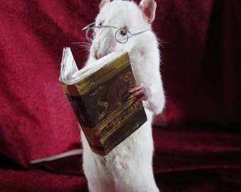 taxidermy rat player taxidermy rat anthropomorphic curiosity