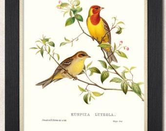 Animal Print Art Deco Sitting Birds Framed Artwork Giclee Print 36.5cmx46.5cm