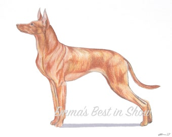 Cirneco dell'Etna Dog - Archival Fine Art Print - AKC Best in Show Champion - Breed Standard - Hound Group - Art Print