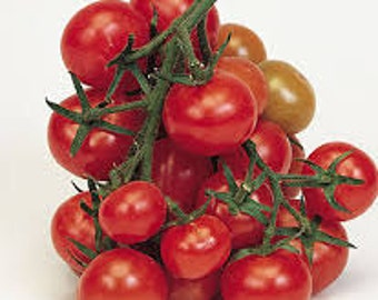 Organically Grown, non-GMO, Heirloom Christmas Grapes Tomato Seed